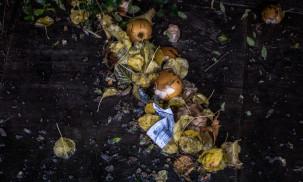 Best Garbage Disposal in 2021: Waste King vs. Insinkerator
