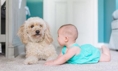 best-home-carpet-cleaner