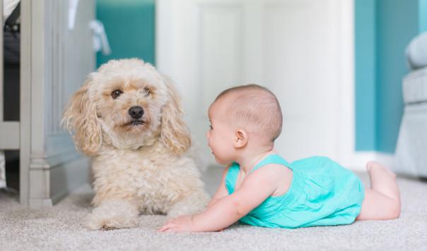 Best Home Carpet Cleaner: Rug Doctor vs. Bissell vs. Hoover
