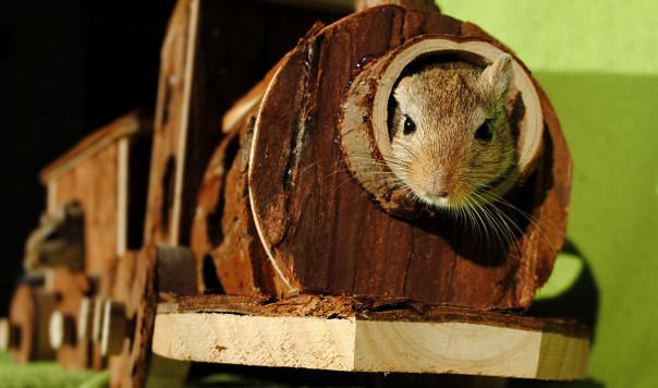 Best Mouse Traps That Work: Glue Traps vs. Snap Traps vs. Electronic