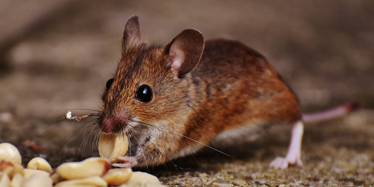 5 Qualities to Look Out For When Choosing a Pest Control Professional